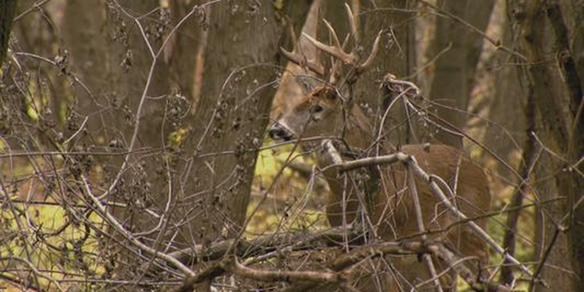 Deer virus confirmed in 1 Kentucky county
