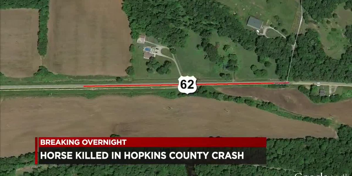 Horse killed, woman hurt in Hopkins Co. crash