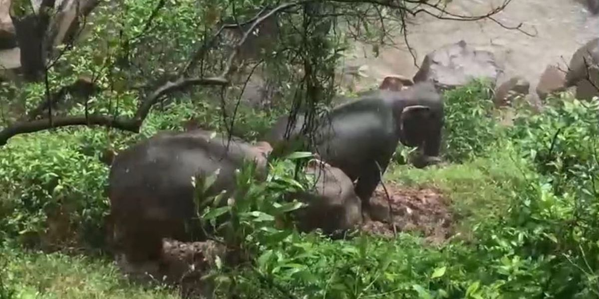 GRAPHIC: 6 elephants drown, 2 rescued near waterfall in Thai national park
