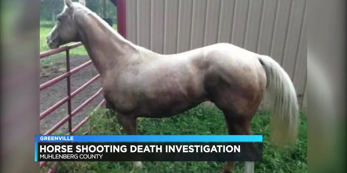 Investigation underway after horse shot, killed