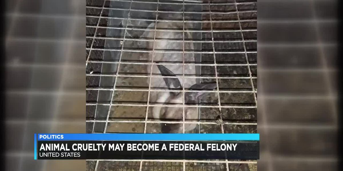 Bill making animal cruelty a federal felony passed by the House