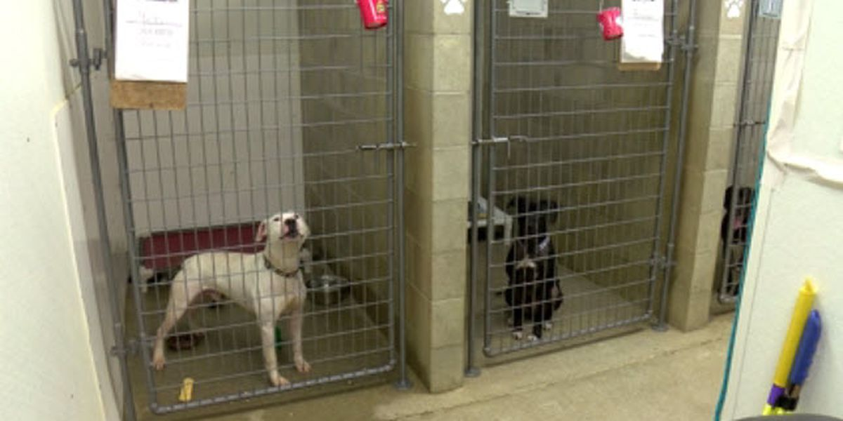 Dozens of animals finding homes thanks to It Takes a Village