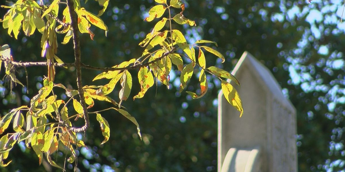 Twilight Tour will help save Ash Trees at Oak Hill Cemetery