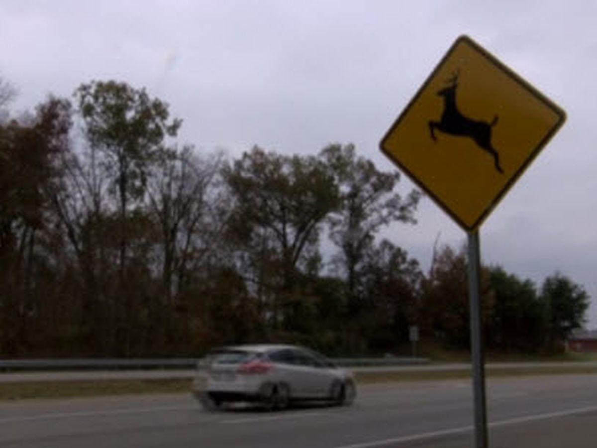 Attention Drivers: Deer on the move; ISP says 'do not swerve'