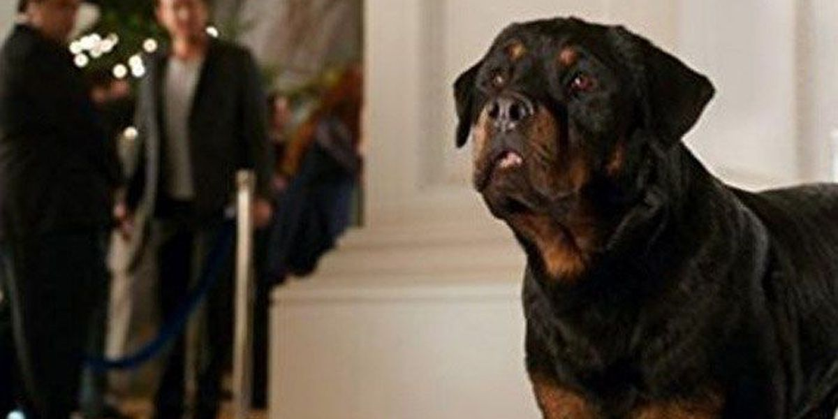 Mom blogs howl over 'Show Dogs' movie, say it teaches kids its OK to let strangers touch them