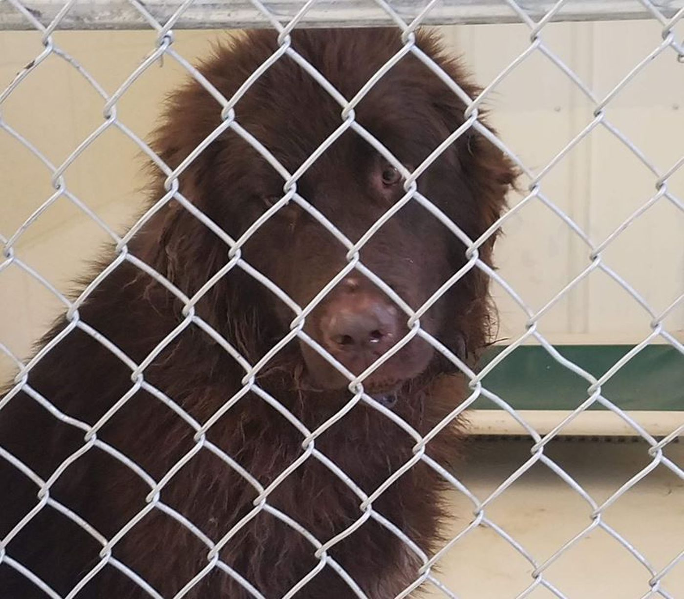 Newburgh Woman Arrested On 6 Counts Of Animal Neglect