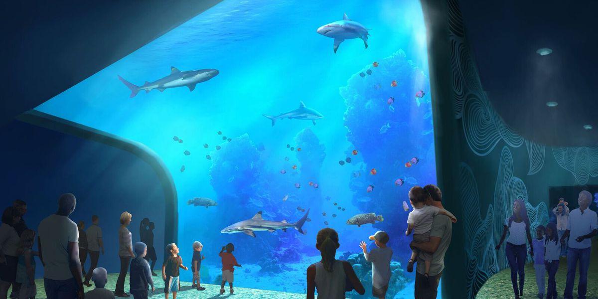 St. Louis Aquarium set to open on Christmas