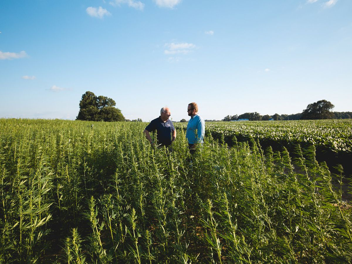 Sales of Kentucky hemp products surged in 2018