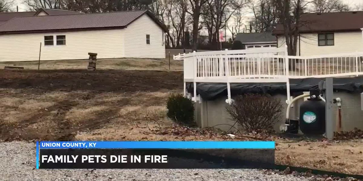 Family pets killed in Union Co. fire