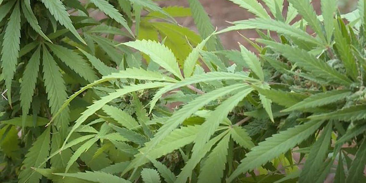 Troopers investigate Albion cannabis facility break-in