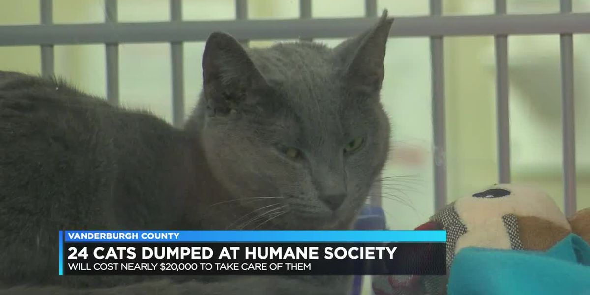 24 cats dumped at VHS