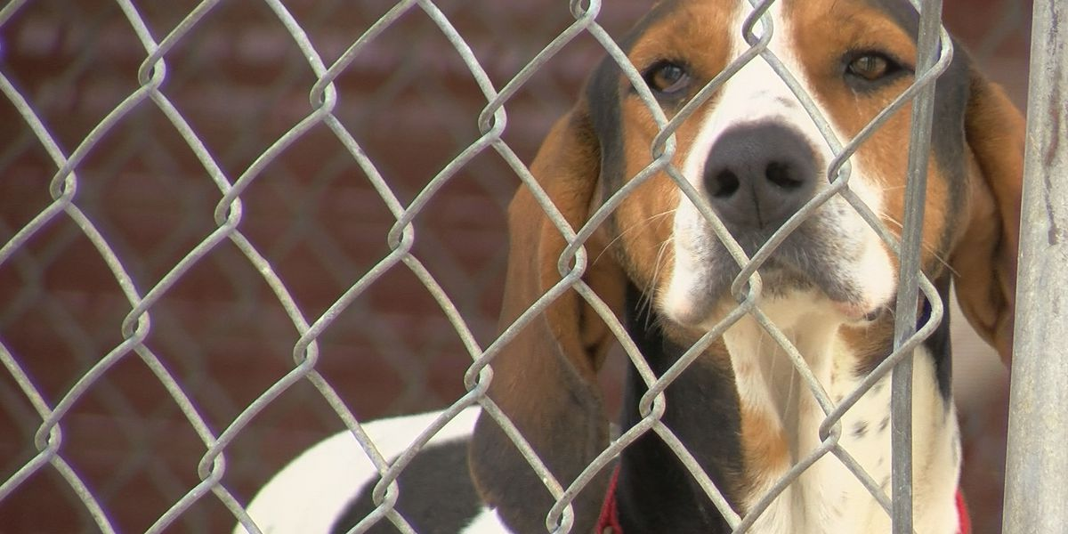 Owensboro Humane Society hopes to see changes after President Trump signs PACT Act