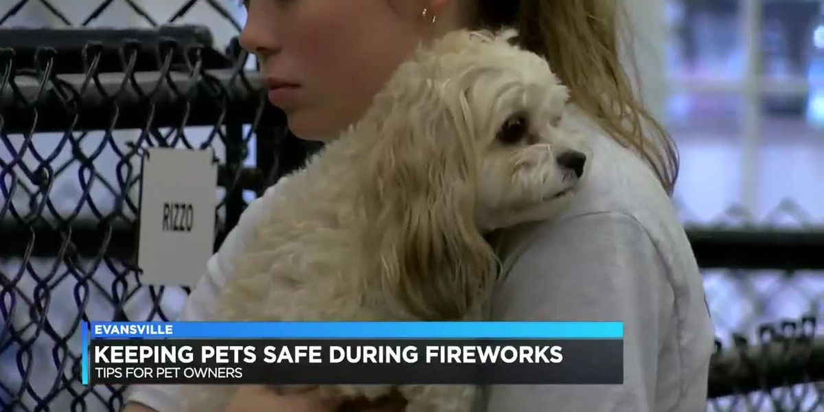 How to keep pets safe during firework celebrations