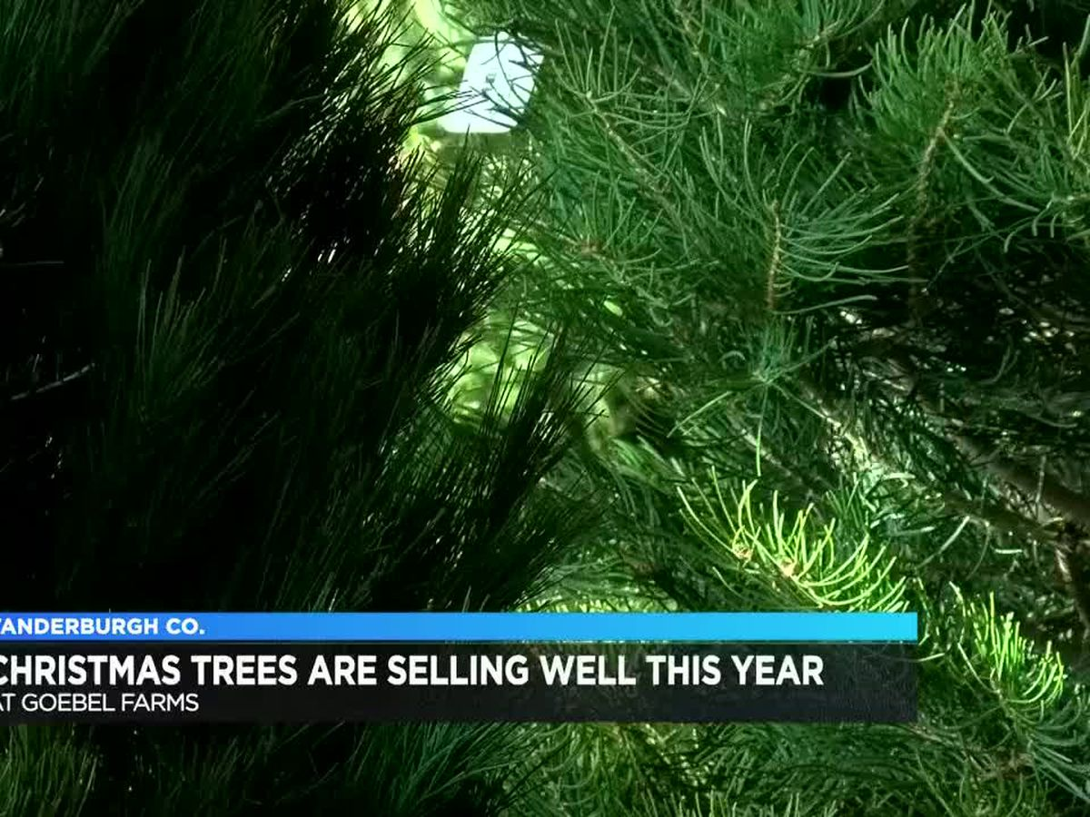 Christmas trees are selling well at Goebel Farms
