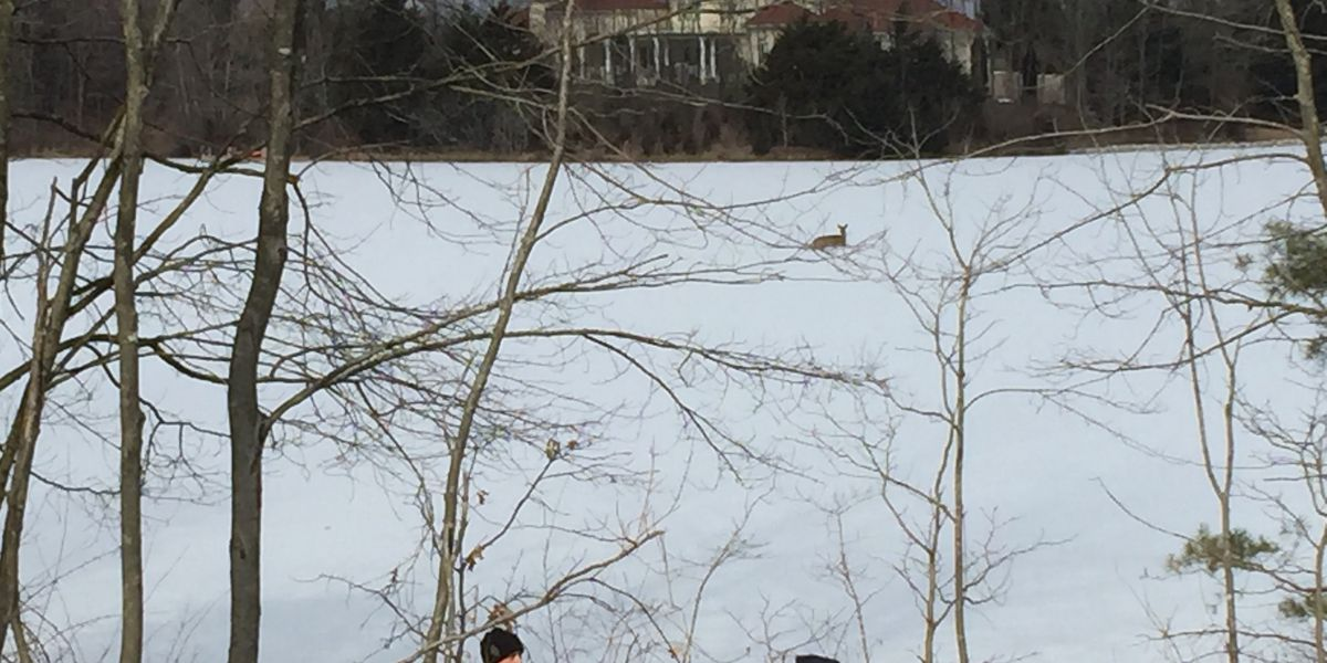Indiana firefighters rescue deer trapped on ice