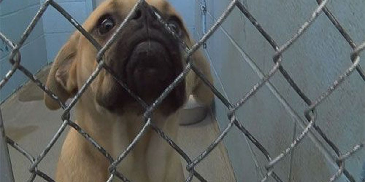 Evansville Animal Control celebrates high adoption numbers