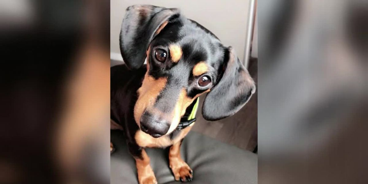 Woman said vet euthanized her dog by mistake