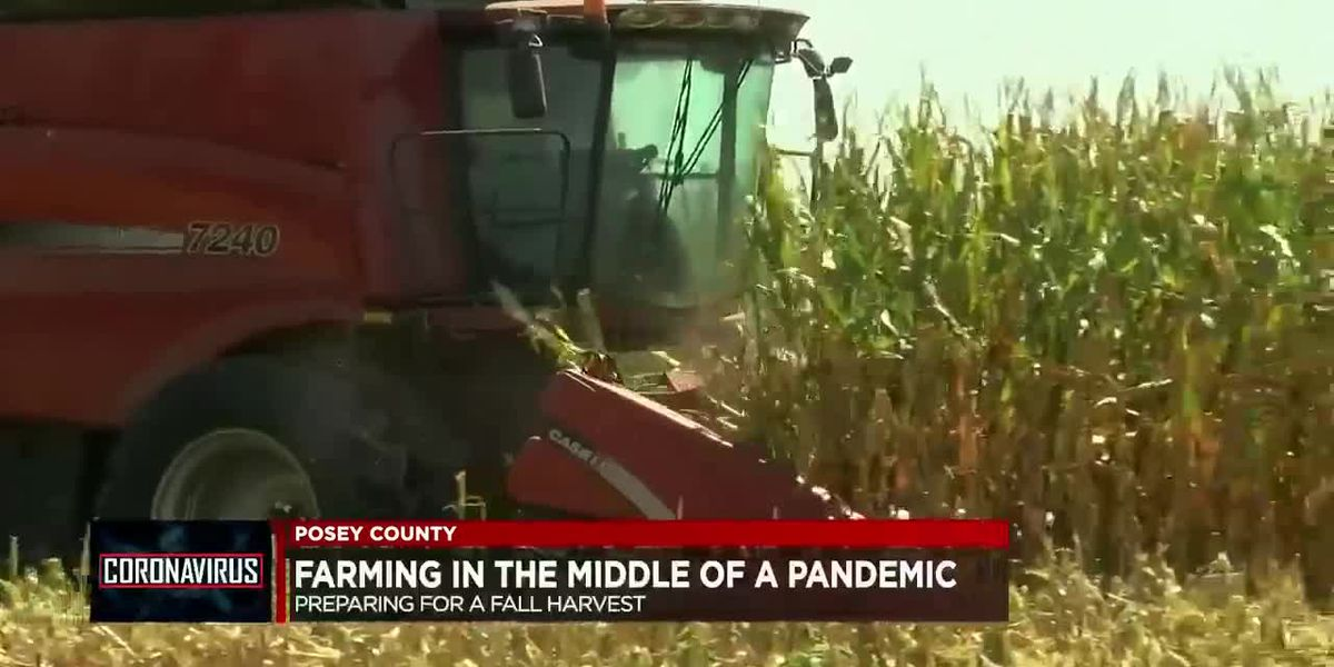 Farming in a Pandemic: Preparing for fall harvest