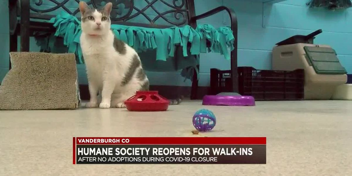 Vanderburgh Humane Society reopens for walk-in visitors