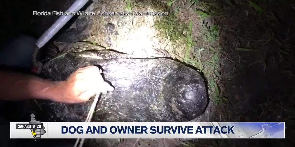 Man bitten while prying open gator's jaws to rescue his dog; gator captured