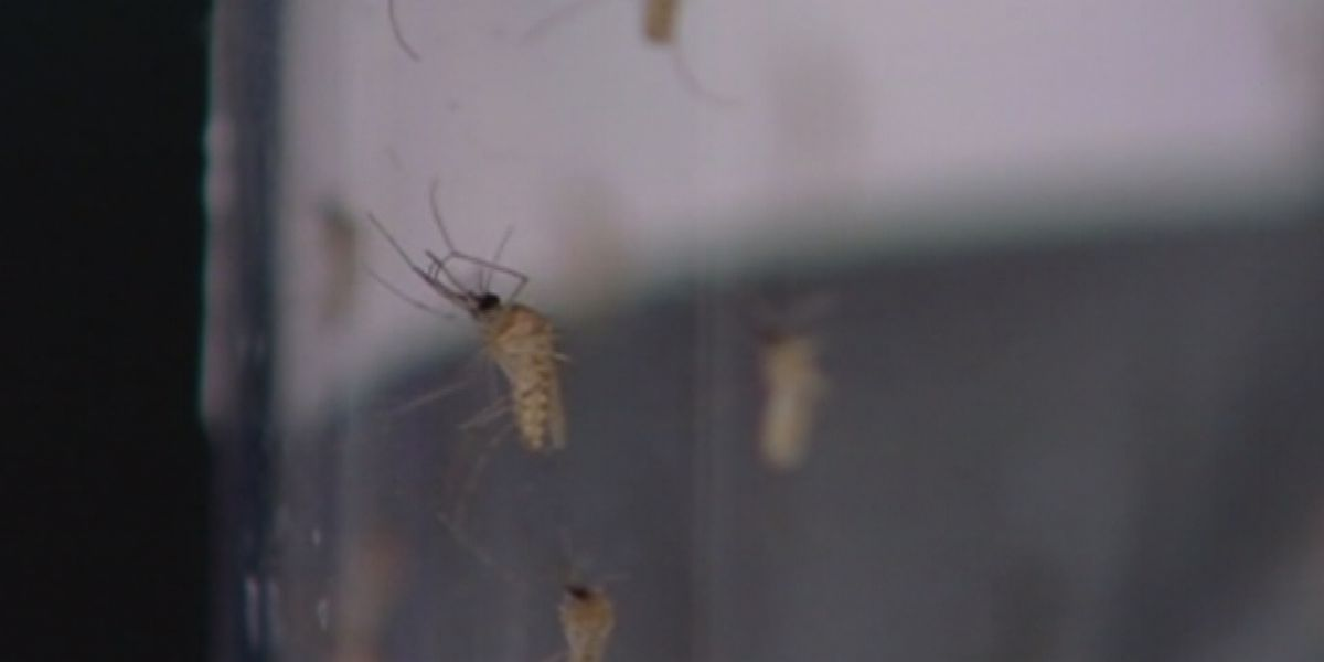 Indiana State Department of Health issues warning over West Nile virus