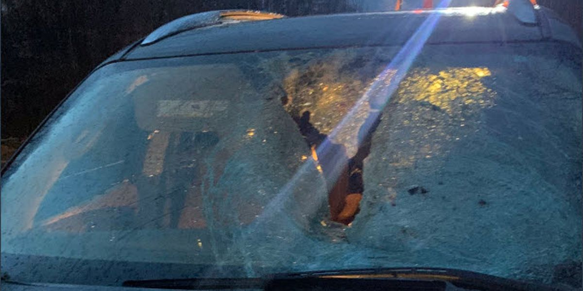ISP: Woman injured after turkey crashes through windshield