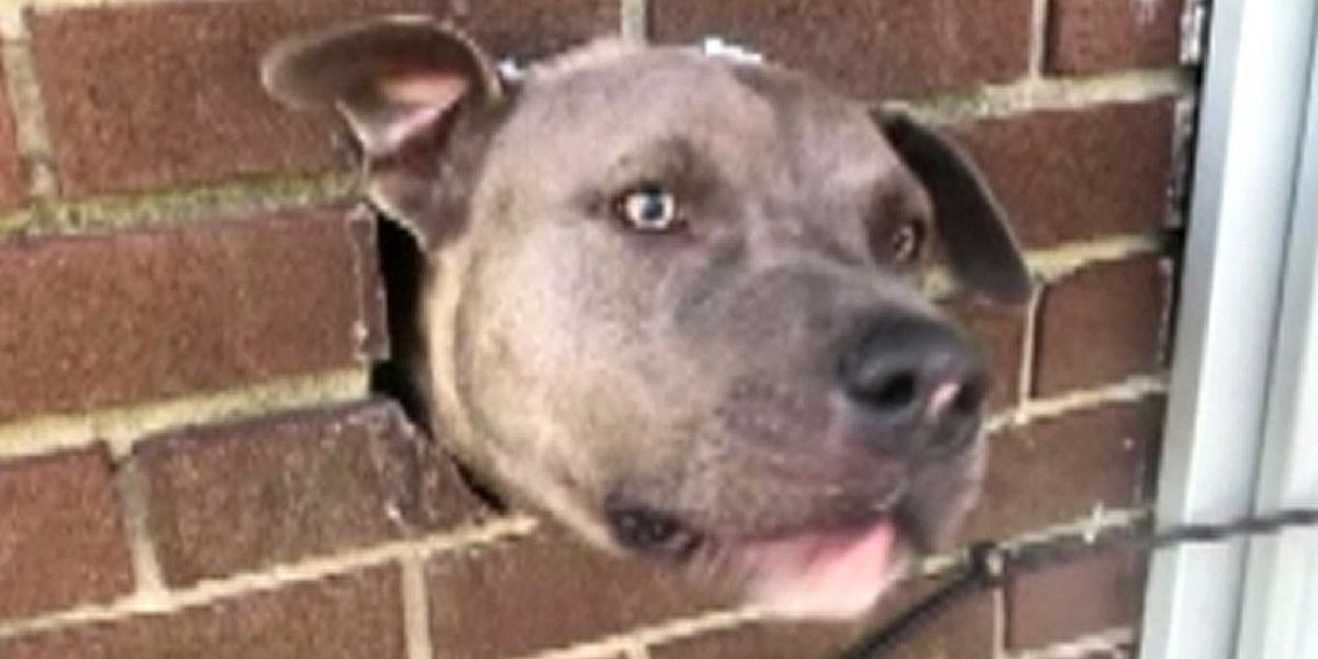 Pooch In A Pinch: Dog Rescued From Dryer Vent
