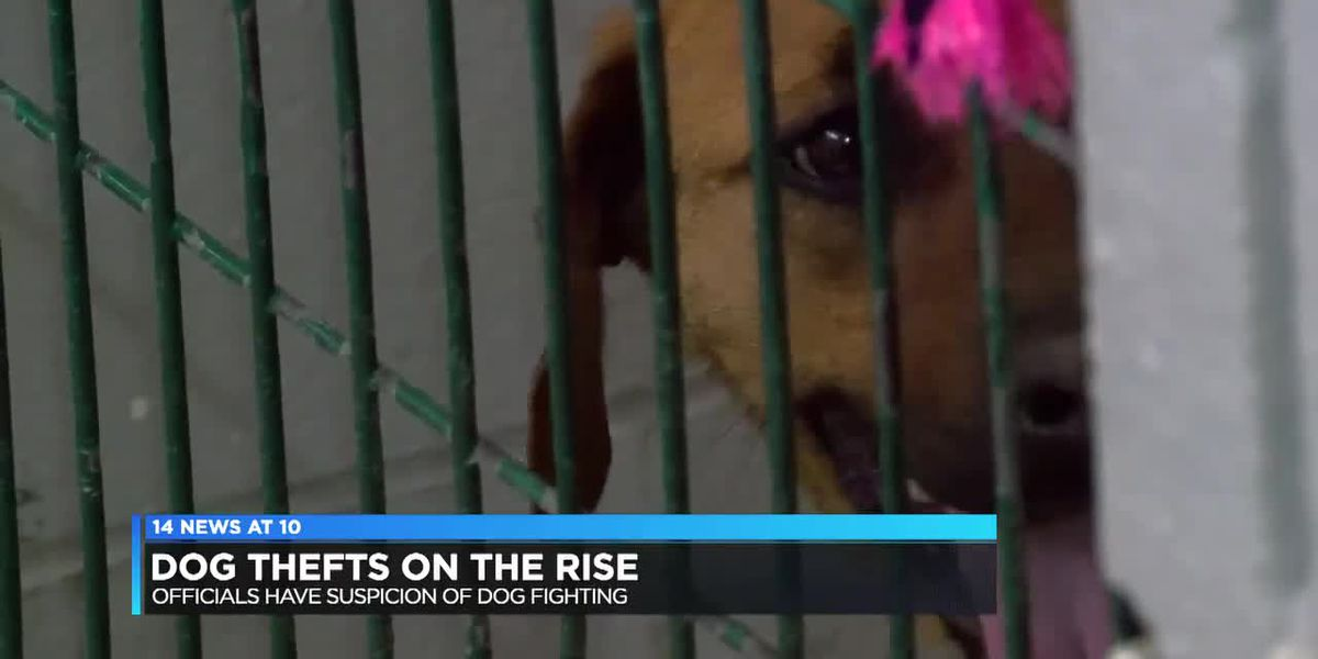Dog thefts massively increasing, Henderson Animal Control reports