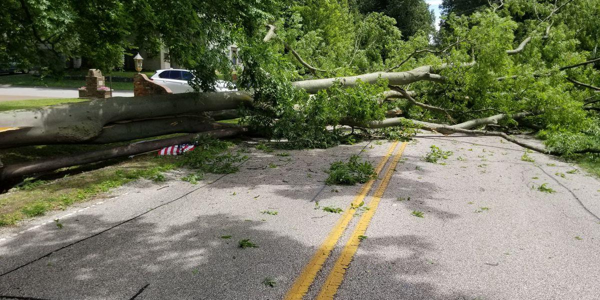 Large tree falls on Newburgh Road