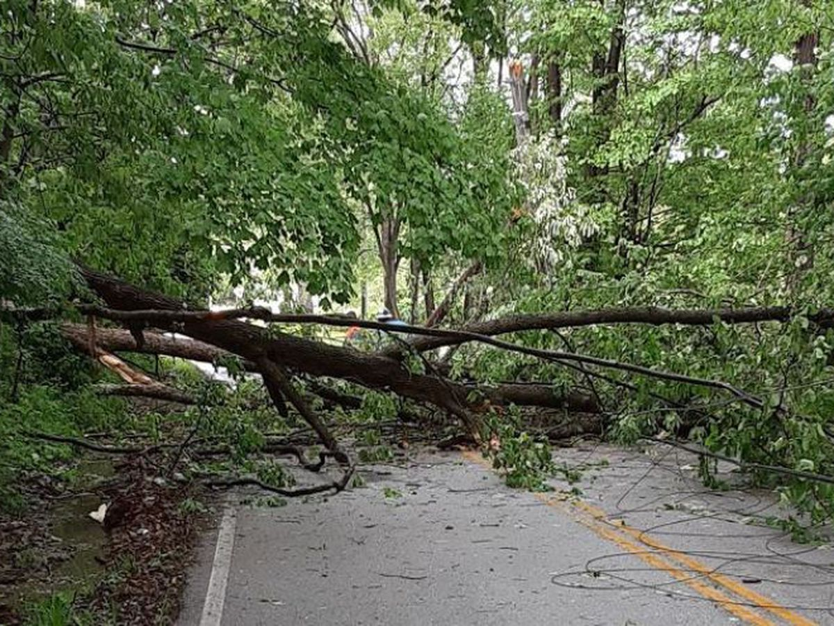 Storms cause fallen trees in the Tri-State