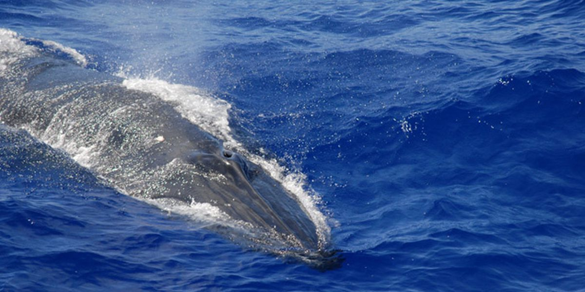 'I instantly knew a whale had grabbed me,' man spit up by one says