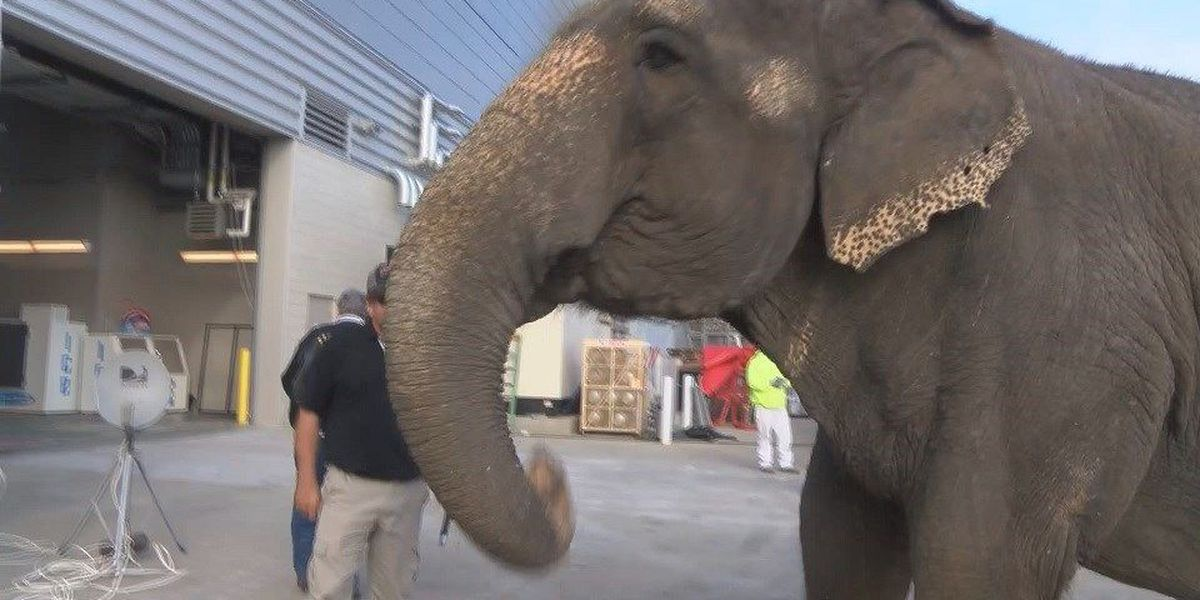 Hadi Shrine Circus in Evansville for Thanksgiving weekend