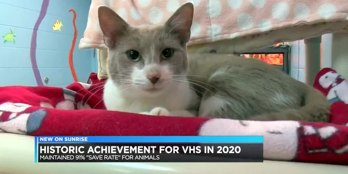 VHS announces more than 90% save rate in 2020