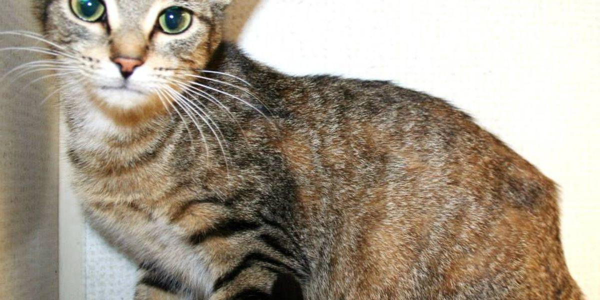 Vanderburgh Humane Society vies for national prize