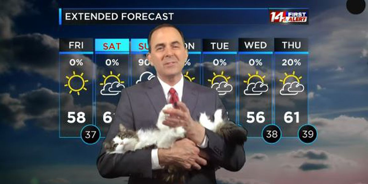 Jeff Lyons' cat Betty becomes internet star