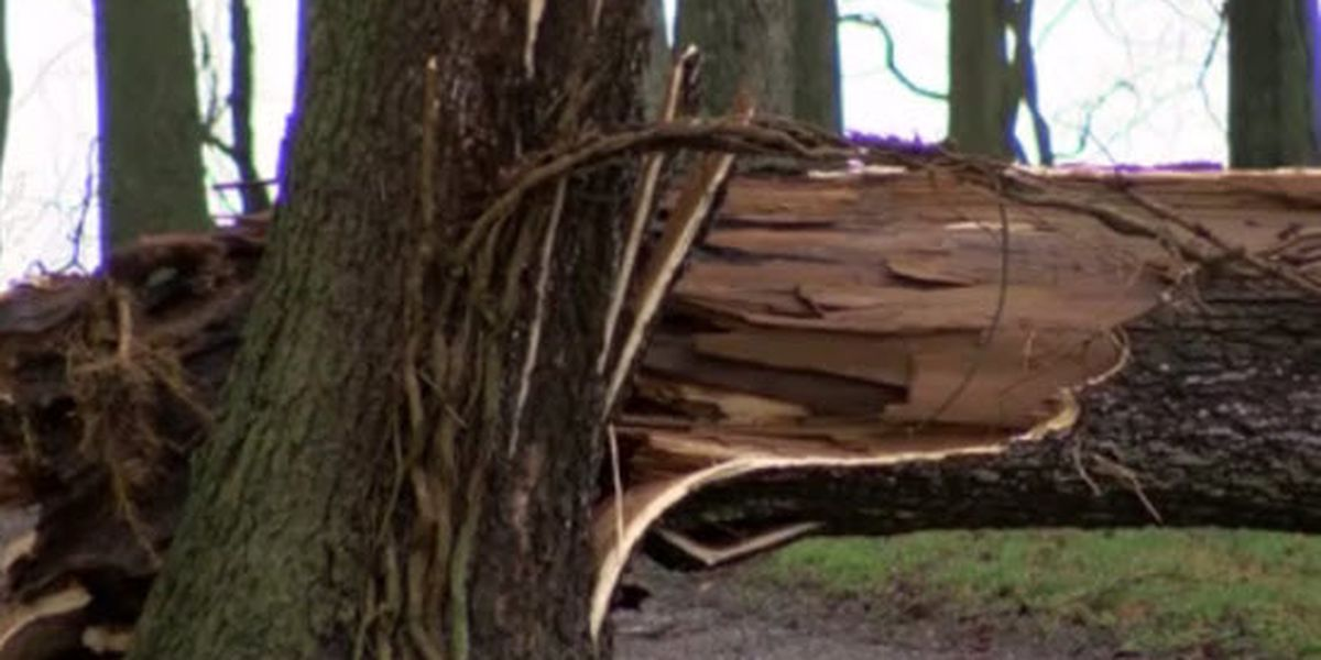 9 tornadic storms tracked through Henderson Co. Thursday