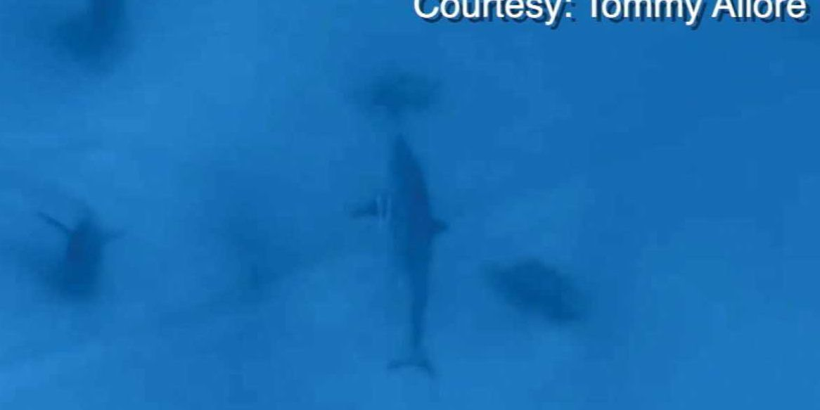 'It was just beautiful': Divers encounter great white shark off Florida coast