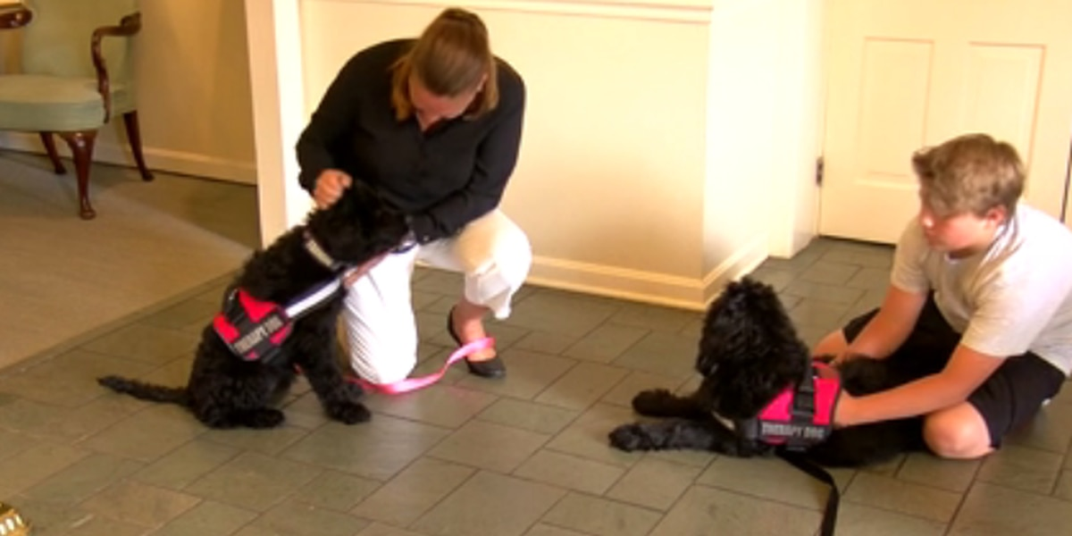 Ziemer Funeral Homes to incorporate therapy dogs into funeral process