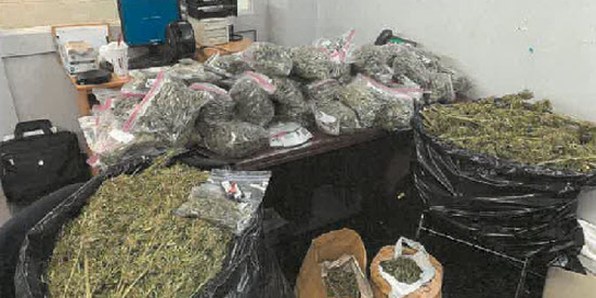 Investigation leads to arrest, discovery of 50lbs of marijuana