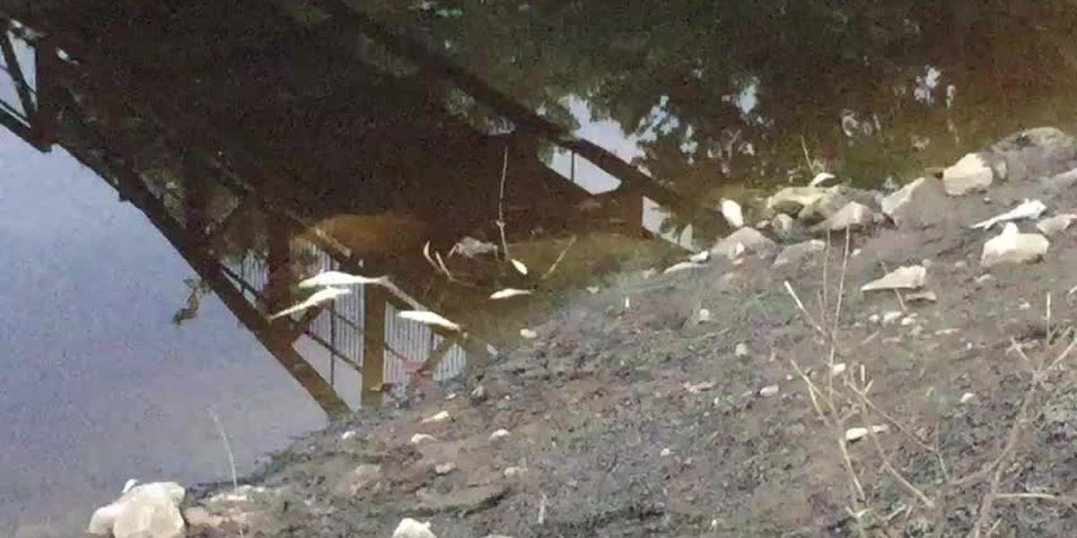 DNR investigating dozens of dead fish in Pigeon Creek