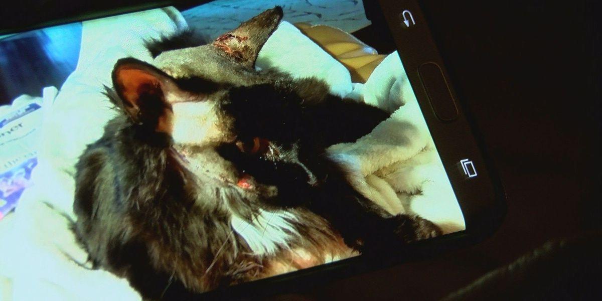 Coyotes kill Henderson family's pet, raises concern in city subdivision