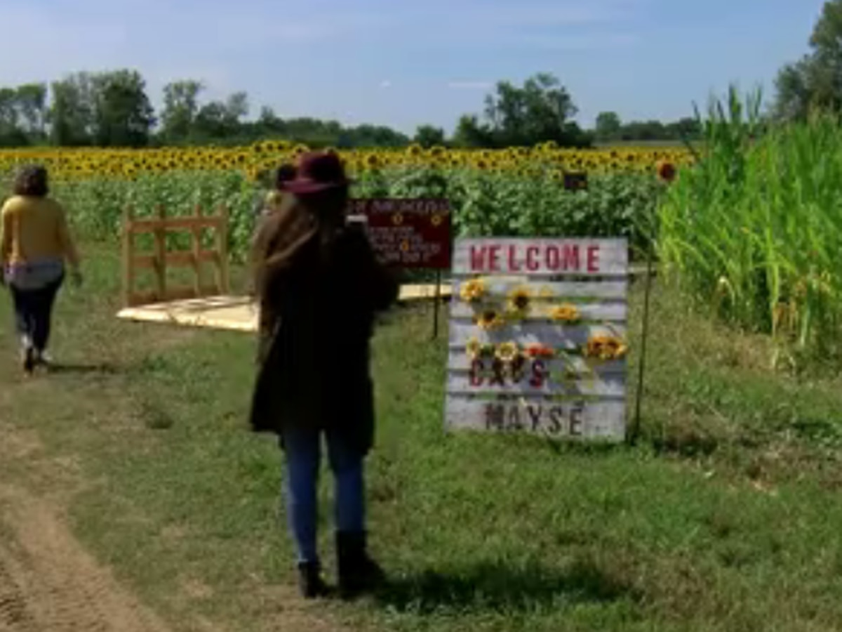 Mayse Farm Market kicks off 'Sunflower Days at Mayse' Sat.