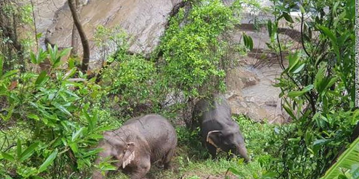 11 elephants die after falling down 500-foot waterfall