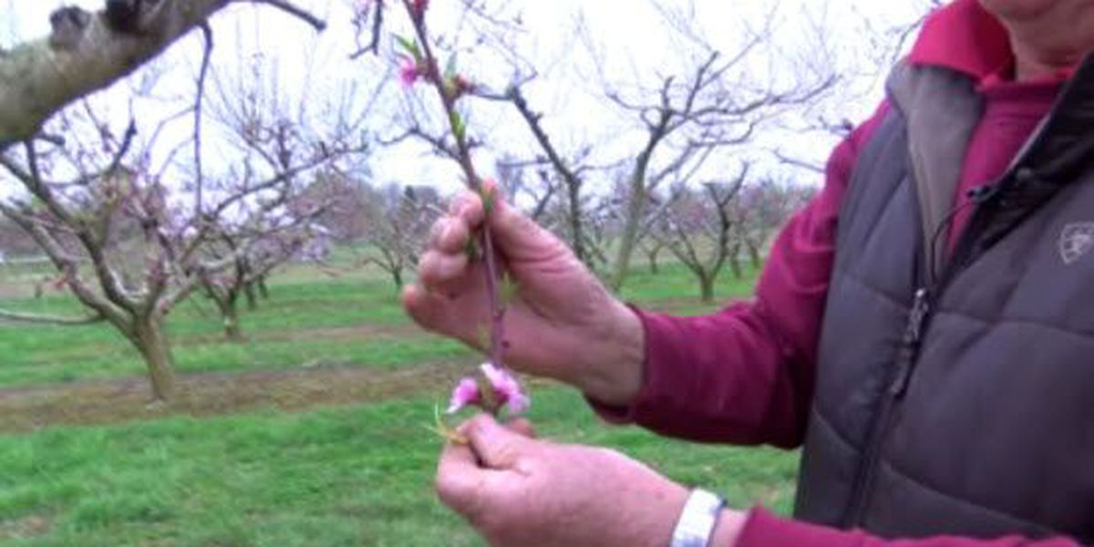 Cold start to spring affecting local crops