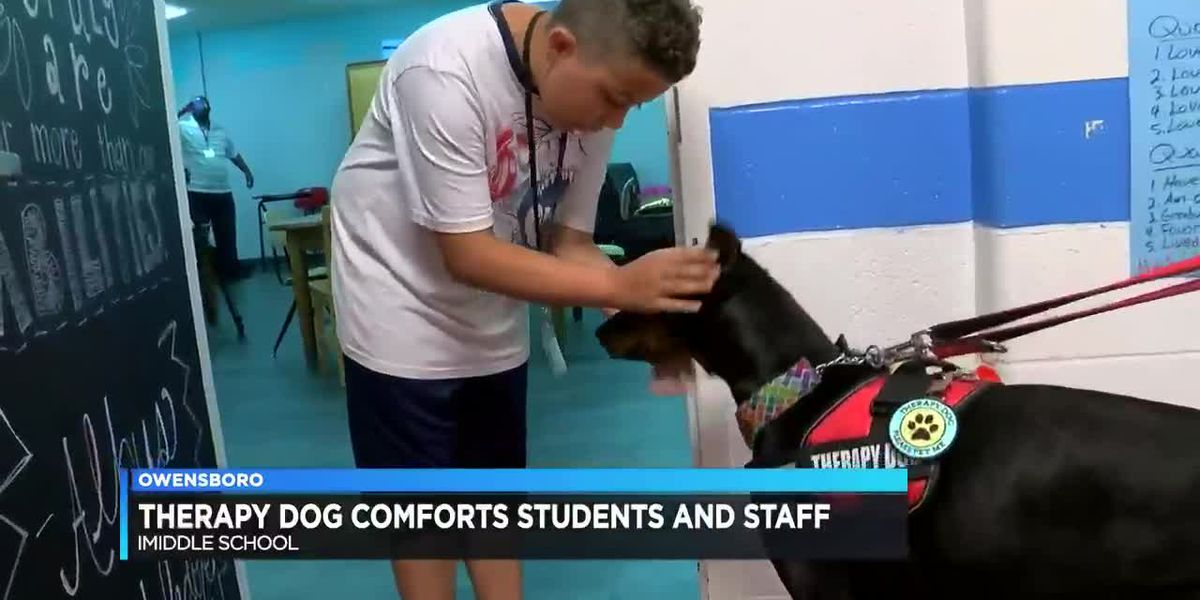 Therapy dog comforts students and staff