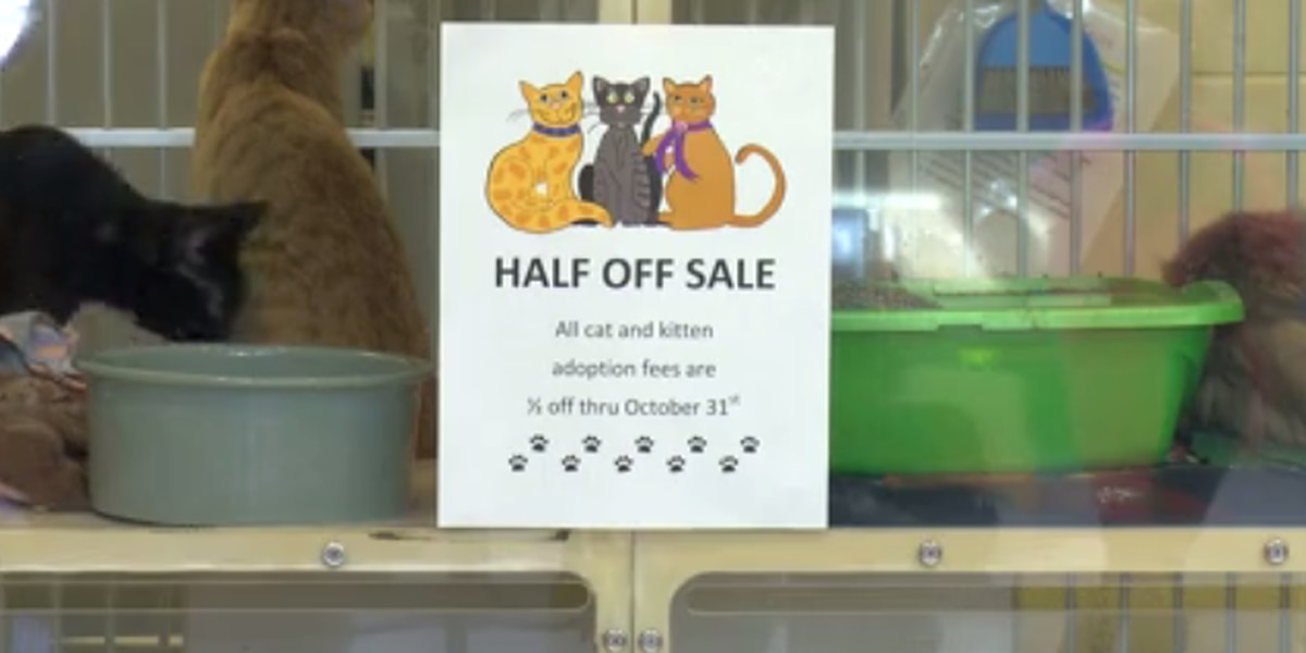 VHS overcrowded with cats, half-price adoption sale