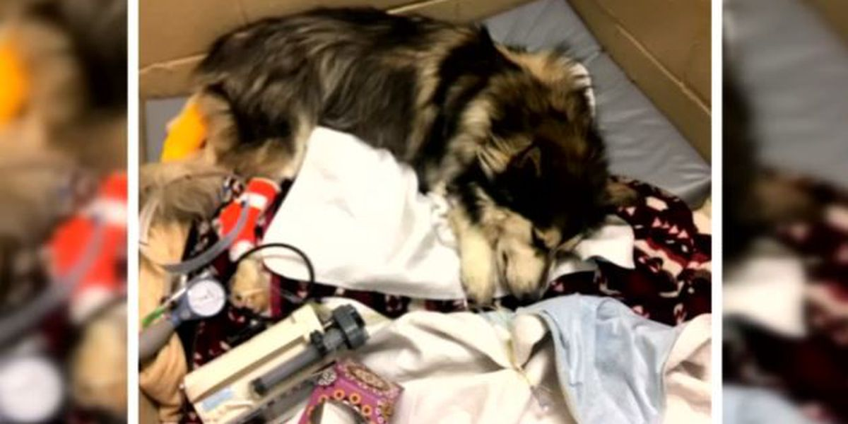 Dog dies after eating chewing gum; family heartbroken