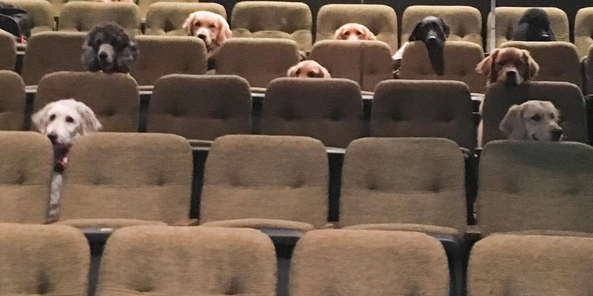 Adorable photo shows group of service dogs attending 'Billy Elliot' theater production in Canada