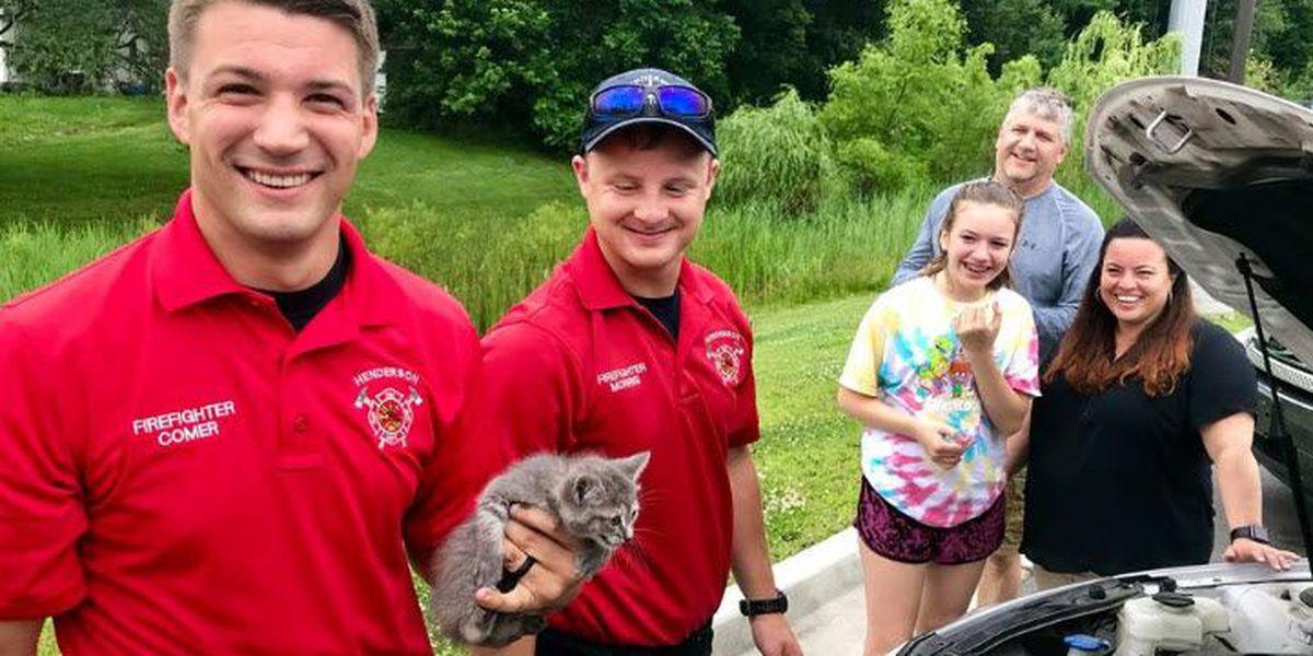 Henderson firefighters rescue kitten stuck in car engine