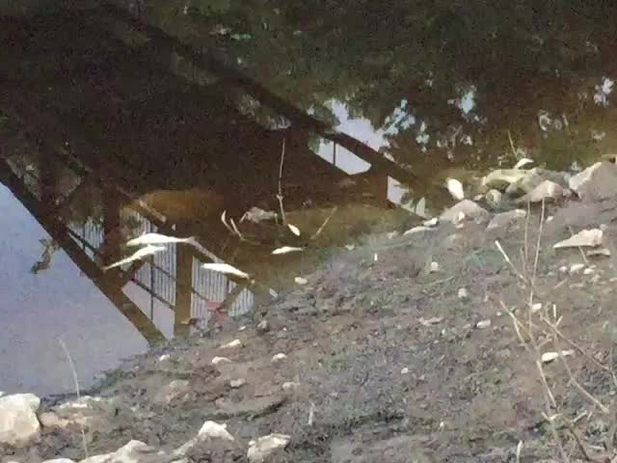 DNR investigating dozens of dead fish in Pigeon Creek